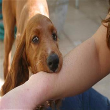 注射狂犬疫苗是怎么预防狂犬病的?