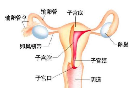 治療輸卵管堵塞性不孕 中藥封包外敷來輔助