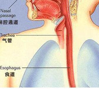 预防食道癌,了解食道癌有哪些高危因素
