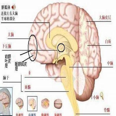 垂体瘤的症状 面容形体改变明显