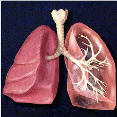 肺炎球菌肺炎有什么症状表现