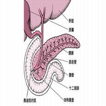 胰腺炎的早期症状有腹腔出血吗