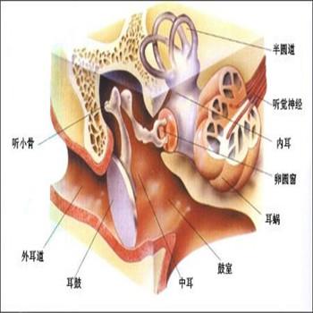 化脓性和非化脓性中耳炎的症状各有哪些