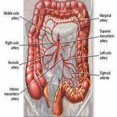 結腸癌術后能活多久 如何進行護理