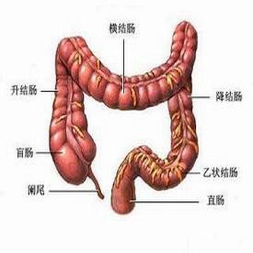 大肠癌的症状有哪些 排便多种异常